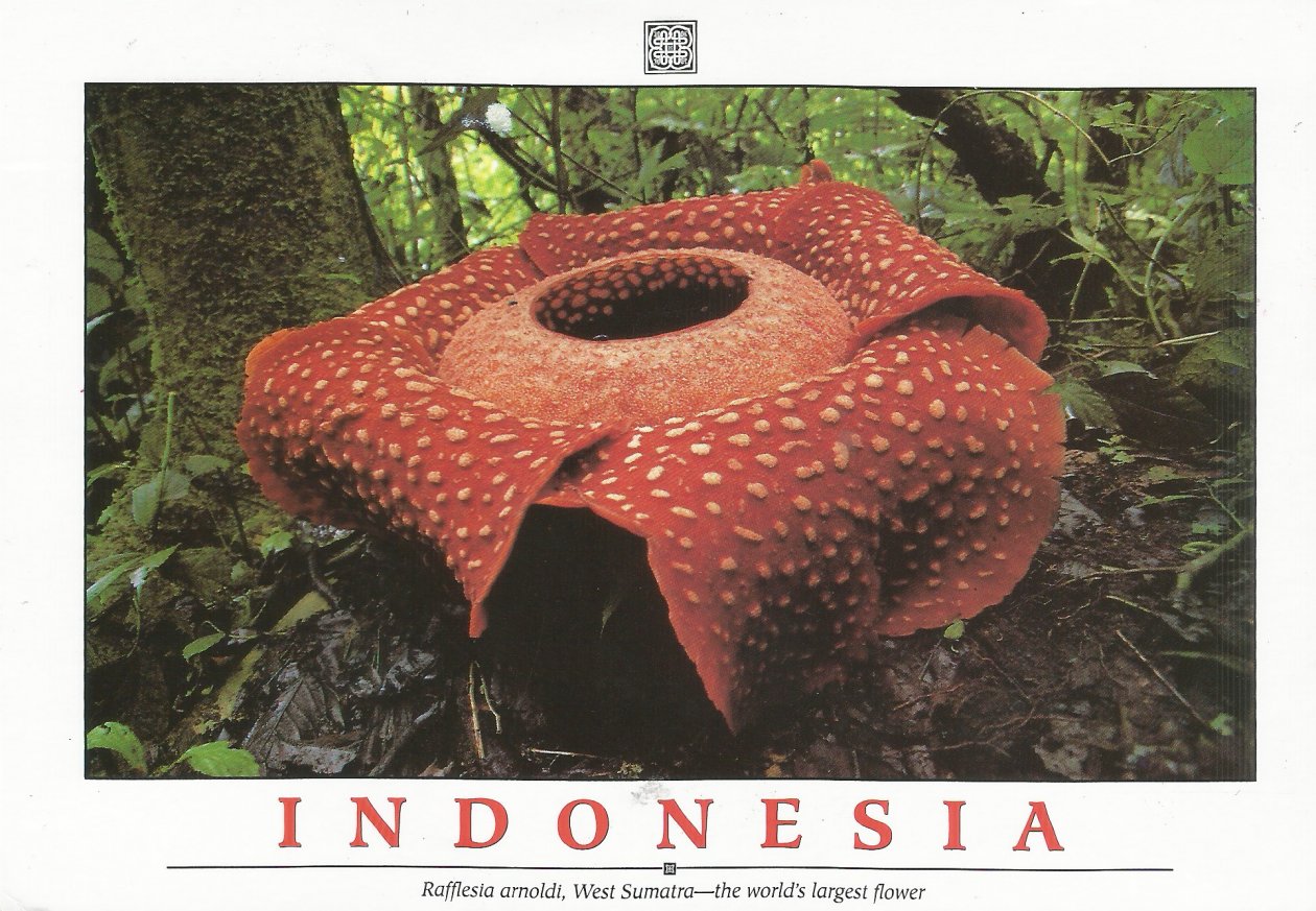 Postcard from Indonesia